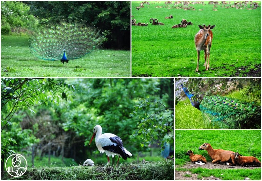 Wildpark_Poing_Natur