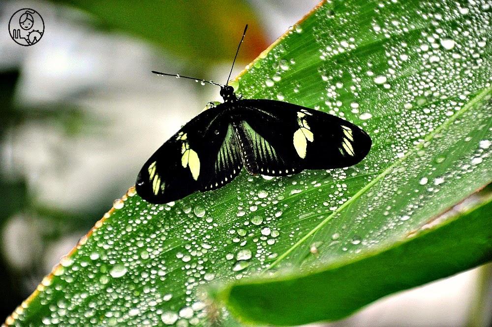 Wystawa-motyli-tropikalnych-w-ogrodzie-botanicznym