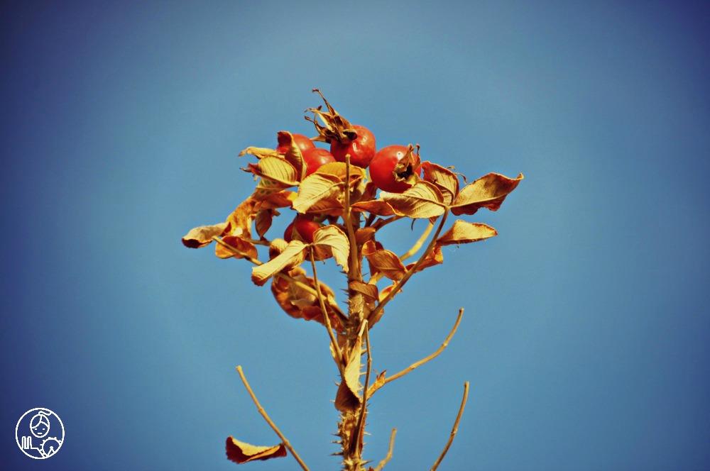 Bawaria jesienią