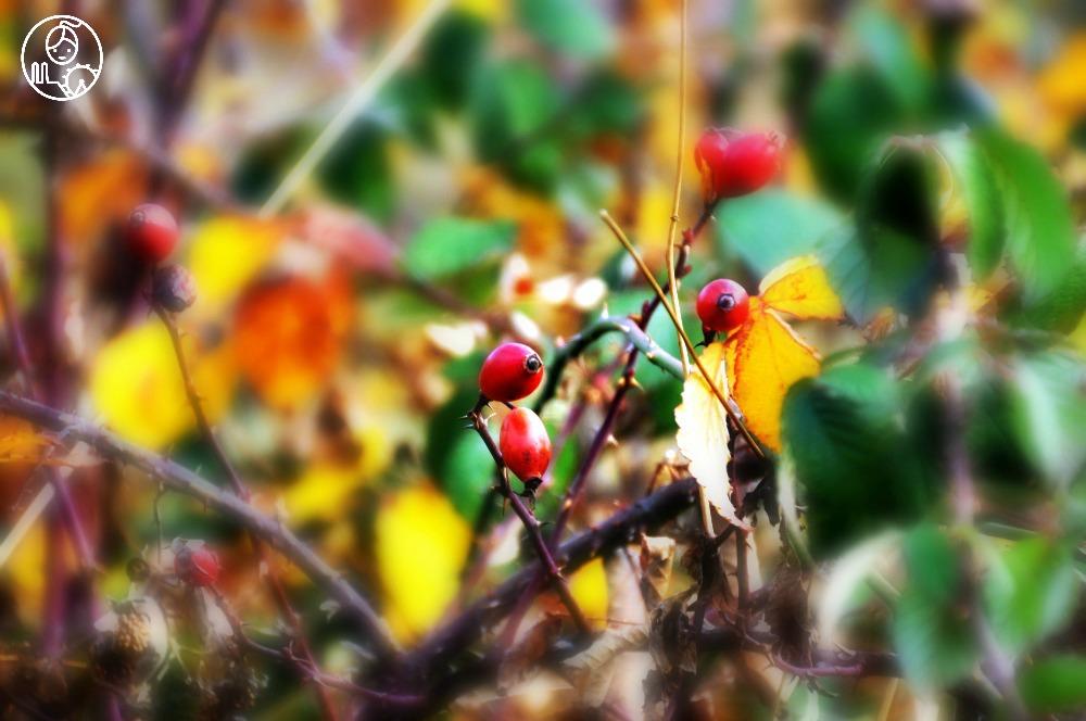 Jesien-w-Bawarii