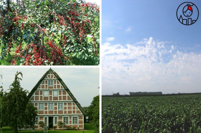 5 regionów w Niemczech, które warto odwiedzić_sady ogrodowe w Altes Land